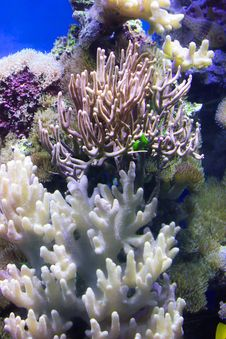 Free Coral Reef, Coral, Reef, Stony Coral Royalty Free Stock Photography - 131670777