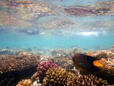 Free Coral Reef, Reef, Ecosystem, Underwater Stock Photos - 131684193