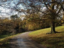 Free Tree, Nature, Path, Leaf Royalty Free Stock Photography - 131684437