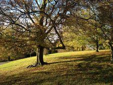 Free Tree, Nature, Leaf, Woodland Stock Photo - 131684630