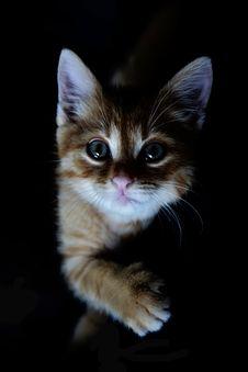 Free Orange Tabby Kitten Stock Photos - 131720063