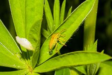 Free Leaf, Insect, Grasshopper, Close Up Stock Photo - 131753830