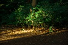 Free Nature, Green, Vegetation, Woodland Royalty Free Stock Images - 131753959