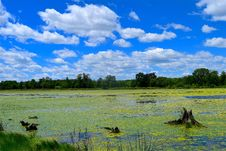 Free Grassland, Sky, Nature, Wetland Stock Photos - 131754313