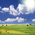 Free Sunny Summer Landscape Stock Photo - 13188110