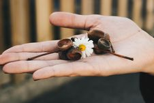 Free Person Holding White Daisy Flower And Brown Accessories Royalty Free Stock Photo - 131803865