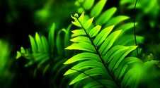 Free Close-Up Photo Of Fern Plant Stock Images - 131860084