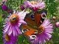 Free Butterfly And Bee Royalty Free Stock Photos - 1322668