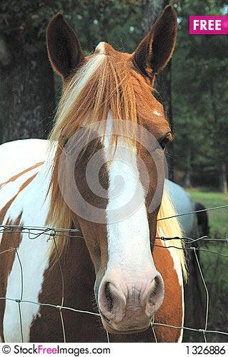 Free Headshot Royalty Free Stock Image - 1326886