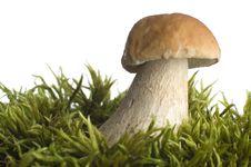 Free Mushroom Stock Image - 1320931