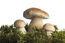 Free Mushrooms Stock Images - 1320934