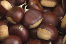 Free Chestnuts Stock Photos - 1320963