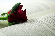 Free Red Rose And Book 2 Royalty Free Stock Image - 1321516