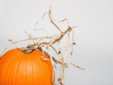 Free Pumpkin With Stem Royalty Free Stock Photo - 1322055