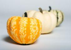 Row Of Pumpkins Stock Photography