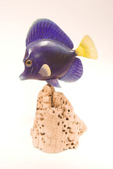 Free Marine Fish - Purple Tang Stock Photography - 1322752