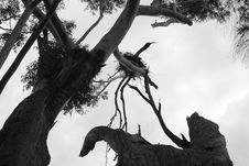 Free Eagles Nest Royalty Free Stock Image - 1323036