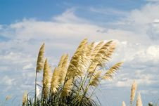 Free Dune Grass Stock Photo - 1323220