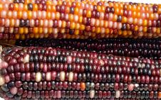 Free Indian Corn3 Stock Photos - 1323233
