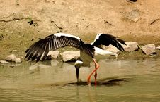 Free Heron Stock Images - 1323704