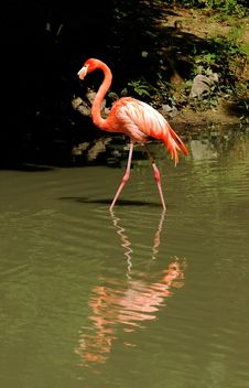 Free Flamingo Stock Images - 1324464