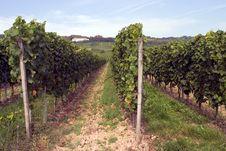 Free Vineyards Stock Photos - 1325163