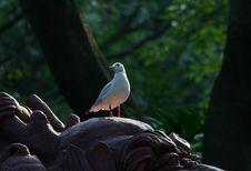Free Gull Stock Photography - 1326152