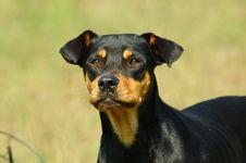 Free Handsome Dog Stock Photos - 1326913