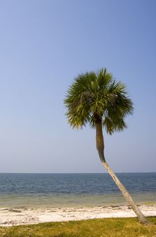 Crooked Palm Tree, Beach And Blue Sky Royalty Free Stock Photos