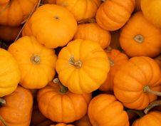 Free Pumpkins Royalty Free Stock Image - 1328856