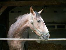 Free Horse Royalty Free Stock Image - 1329946