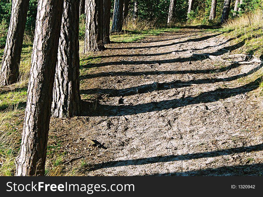 Trunks  shadows