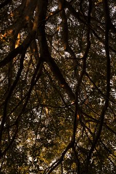 Free Low Angle Photo Of Tree Branches Stock Photo - 132036620