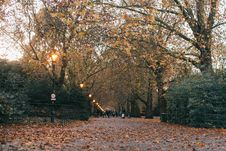 Free Pathway Surrounded By Trees Stock Image - 132036621