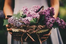 Free Photo Of Woman Holding Basket Of Purple Flowers Stock Images - 132036674
