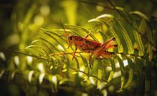 Free Close-Up Photo Of Grasshopper Perched On Fern Plant Royalty Free Stock Photos - 132036718