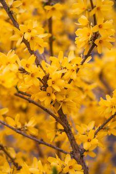 Free Macro Photography Of Yellow Flowering Tree Stock Photos - 132036763