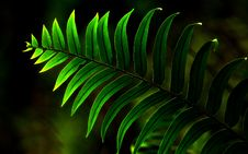 Free Close-Up Photo Of Fern Plant Royalty Free Stock Photos - 132036838