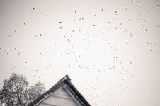 Free Silhouette Of Birds Stock Photos - 132036893