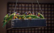 Free Photo Of Group Of Parrots Royalty Free Stock Photography - 132036907