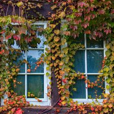 Free Photo Of Window With Vine Plants Royalty Free Stock Photography - 132036977