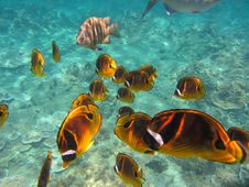 Free Ecosystem, Marine Biology, Coral Reef Fish, Underwater Stock Photos - 132087833