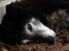 Free Fauna, Wildlife, Fur, Snout Royalty Free Stock Image - 132088006