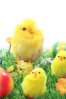 Easter Eggs And Chicks In A Meadow Royalty Free Stock Image