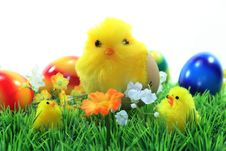 Free Easter Chicks Stock Photos - 13217193