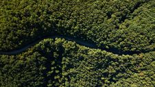 Free Road Between Green Trees Aerial Photography Royalty Free Stock Photography - 132106327