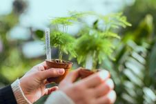 Free Person Holding To Potted Plants Stock Photos - 132106333