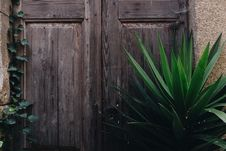 Free Green Leafed Plant Near Brown Wooden Panel Door Stock Photos - 132106513