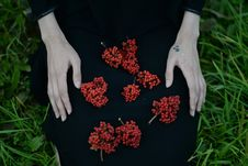 Free Red Berries On Person S Lap Royalty Free Stock Image - 132106546