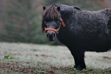 Free Selective Focus Photography Of Black Pony On Grass Stock Photos - 132106613